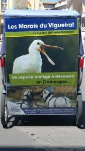 Les Marais du Vigueirat, une reserve naturelle en Camargue
