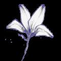 cecilia fleur